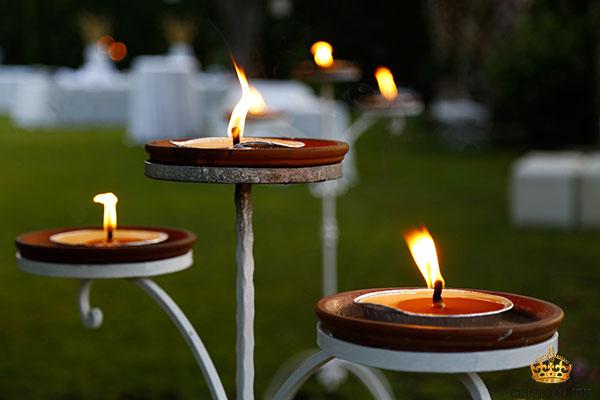 araucaria candele