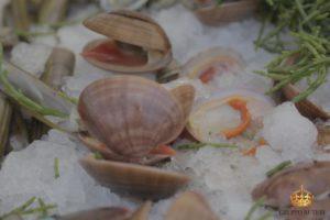 auteri piatti conchiglie pesce