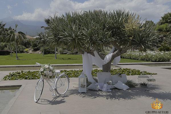 radicepura bici albero