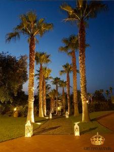 borgo ulivi palme
