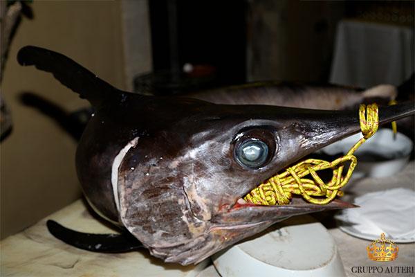 pupillo pesce spada